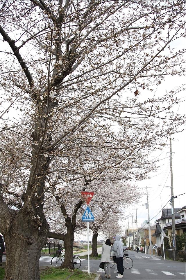 桜と温燗と乾物_01.JPG
