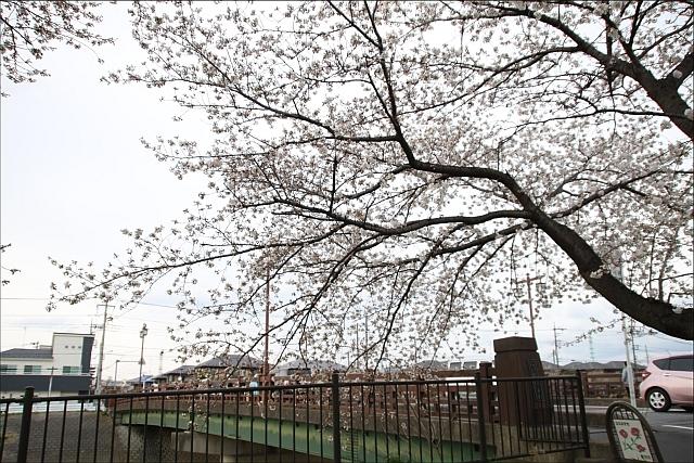 桜と温燗と乾物_02.JPG