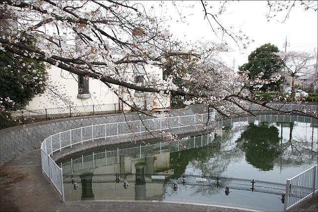 桜と温燗と乾物_03.JPG