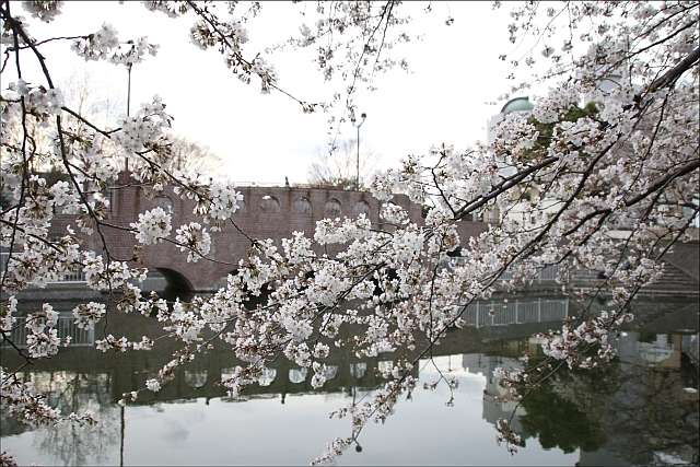 桜と温燗と乾物_05.JPG