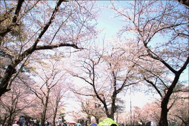 桜吹雪と生酒とやっぱり乾物_01.JPG