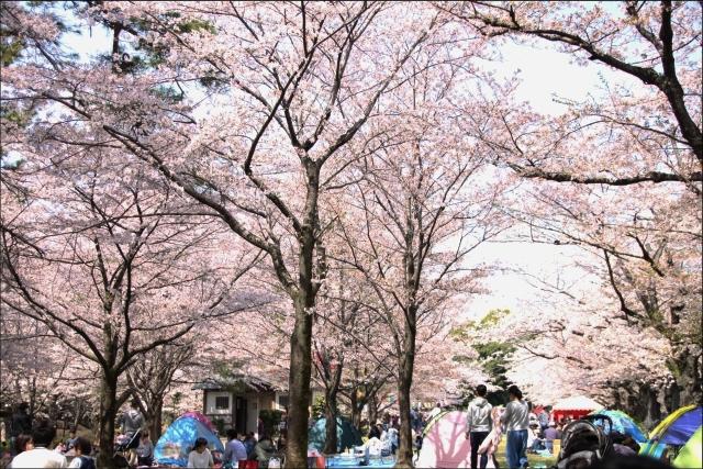 桜吹雪と生酒とやっぱり乾物_02.JPG