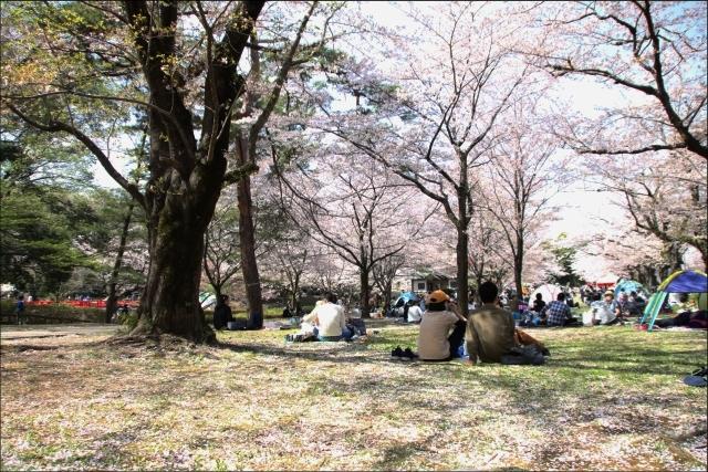 桜吹雪と生酒とやっぱり乾物_03.JPG