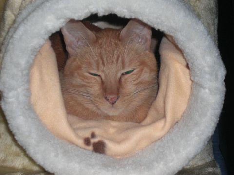 猫ハウス03.JPG