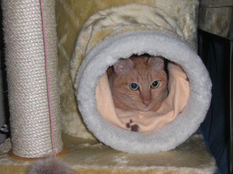 猫ハウス04.JPG