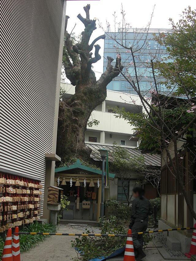 福岡へ再び行ってみた_5-13.JPG