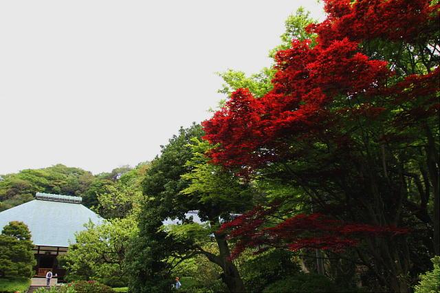 鎌倉1-15.JPG