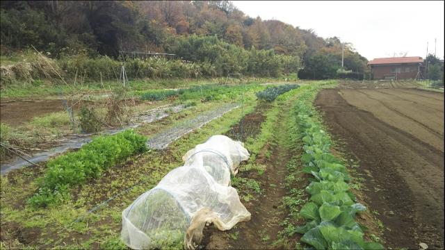 2018年の冬、収穫祭_02.JPG